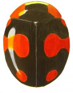Proper Lady Beetle, Brachiacantha decora