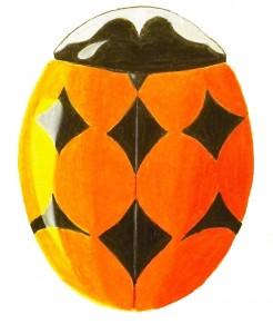 Orange-spotted Lady Beetle, Brachiacantha ursina
