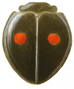 Twice-stabbed Lady Beetle, Chilocorus stigma