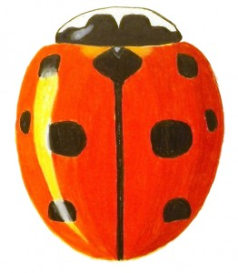 Nine-spotted Lady Beetle, Coccinella novemnotata