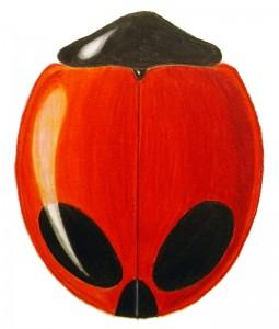Children's Lady Beetle (1), Exochomus childreni childreni