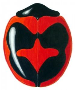 Children's Lady Beetle (2), Exochomus childreni childreni