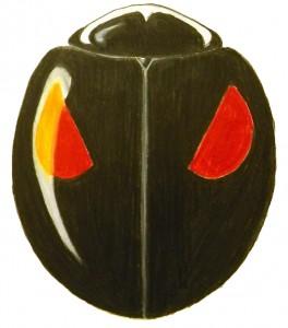 Ashy-gray Lady Beetle, Olla v-nigrum